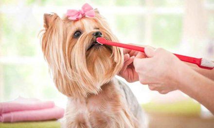 Dentisterie vétérinaire