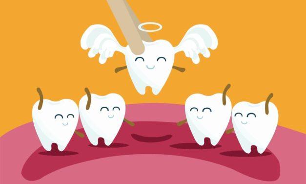 Où va une dent après son extraction?
