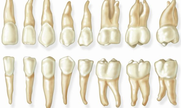 Permanent teeth (adult teeth)